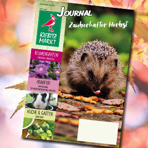 Kiebitzmarkt Journal Herbst