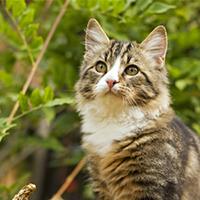 Pflegeprogramm für die Katze