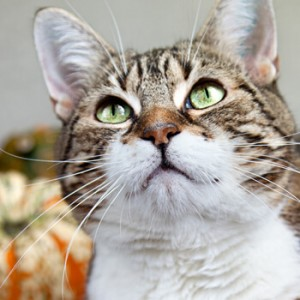 Katzenfutter, Ratgeber zur Katzenernährung, Barf, barfen