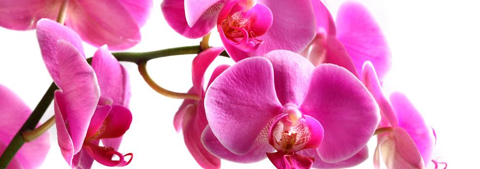 Orchideen - Exotische Schönheiten