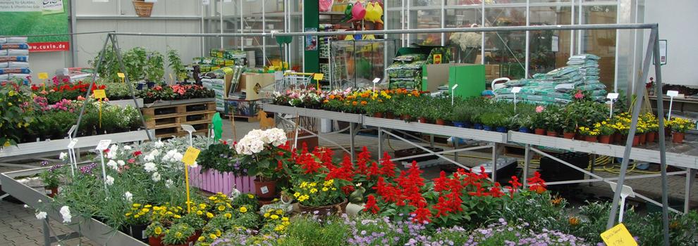 Kiebitzmarkt Zanger in Villmar Blumen und Pflanzen