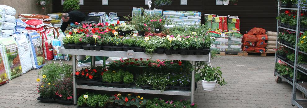 Kiebitzmarkt Wegener Blumen
